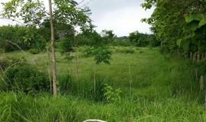 ที่ดิน 2 ไร่เศษ ไม่แพง ไร่ละ 200,000 บาท อ.สูงเม่น จังหวัดแพร่