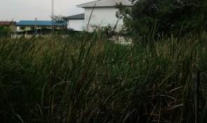 ที่ดิน 9 ไร่ เป็นโฉนด ใกล้อมตะนคร ชลบุรี พื้นที่สีเหลือง ทำคอนโดได้