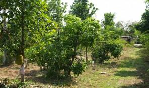 ขายที่ดินเปล่า จัดทำเป็นสวนเกษตรพืชผักปลอดสารพิษ 4 ไร่ ต.แม่แฝก อ.สันทราย เชียงใหม่