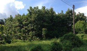 ที่ดินพร้อมต้นสัก 100 กว่าต้น เนื้อที่ 1 ไร่ 2 งาน 43 ตารางวา อ.ลอง จ.แพร่ เหมาะสำหรับปลูกบ้าน ทำสวน