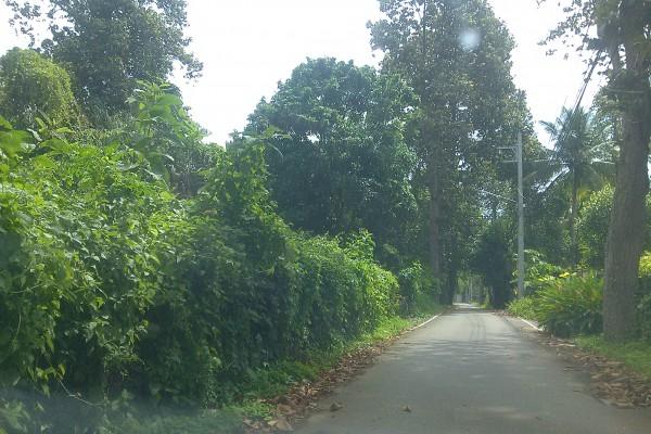 ขายที่ดินเปล่า 13 ไร่ ต.ช้างเผือก อ.เมือง จ.เชียงใหม่ อยู่เชิงเขา เงียบสงบ เหมาะสำหรับทำรีสอร์ท วิวธรรมชาติ