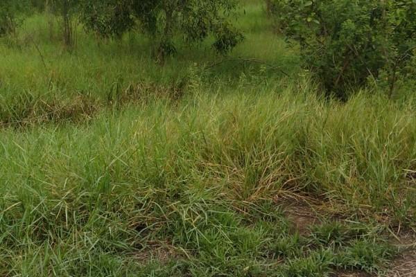 ขายที่ดินเปล่า 3 แปลง รวม 3 ไร่ 47 ตารางวา ที่จัดสรร อ.ไทรน้อย จ.นนทบุรี เหมาะทำสวนหรือบ้านพัก